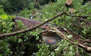 Police said two men and a woman were killed when a garden shed was destroyed by a tree