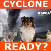 Great guide for all pets owners; RSPCA Queensland. Source: http://www.rspcaqld.org.au/Information/AnimalCareTips/SummerTips/CyclonePreparedness