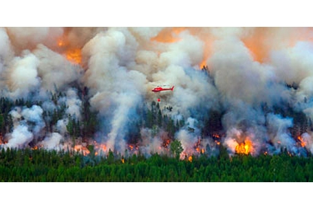 scene from a recent biggest forest fire in Sweden's modern history.