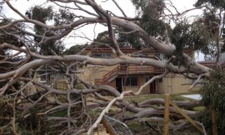 Winds gusting up to 110km/h have brought down trees in southern Tasmania. Photograph: Andrew Fisher/ABC News