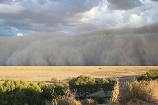 Photo: A massive dust storm sweeps toward Bedourie in a line across the parched outback. (Supplied: Maggie den Ronden)