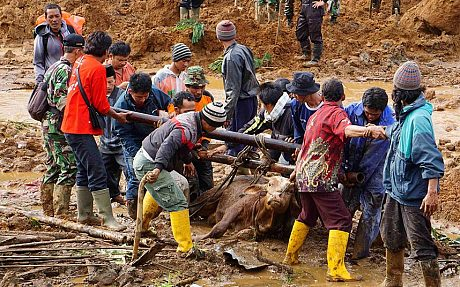 Indonesian soldiers and rescue team members lift a cow trapped in the mud after a landslide hit the village of Sampang in Banjarnegara (Reuters)
