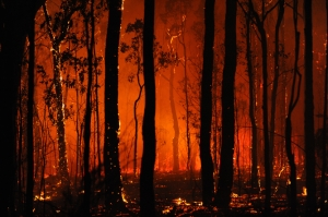 Bushfire burns near homes in the Blue Mountains, West of Sydney, in 2013. Dan Himbrechts/AAP