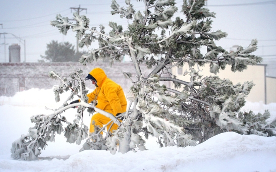 A man emerges from the snow beyond a pine twisted from heavy winds near Nantasket Beach in Hull, Massachusetts. Picture: Gary Higgins/AP Source: http://www.telegraph.co.uk/news/picturegalleries/worldnews/11371203/New-York-blizzard-Winter-snow-storm-Juno-hits-US-East-Coast-in-pictures.html?frame=3179111