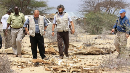 Luca Alinovi, senior emergency and rehabilitation coordinator at the Food and Agriculture Organization visits southern Somalia to see the effects of drought on livestock. How can resilience be applied in practice across sectors to achieve scale? Photo by: FAO