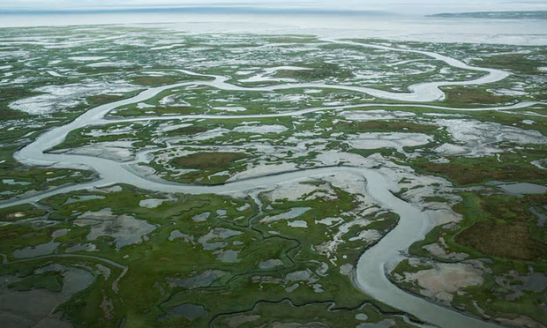 The marshy, tundra landscape surrounding Newtok, Alaska, a village threatened by the melting of permafrost.   Photograph: Andrew Burton/Getty Images