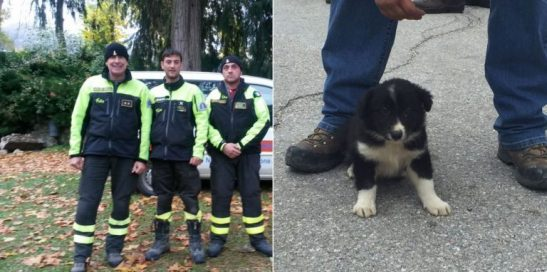 Puppy Saved in Italian Earthquake Will be Trained to Help Save Others in Need!