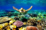 If the Reef was a dam, would it get more funding?