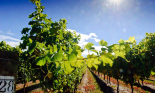 Millions of dollars of wine have been lost along with storage vats amid concern for the forthcoming harvest