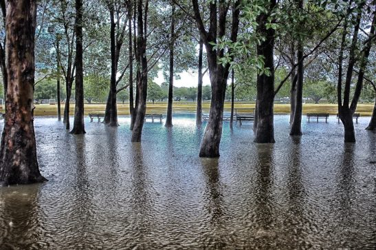 Flooded_trees_0616