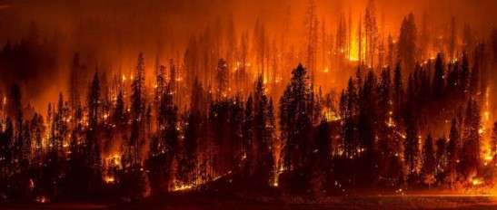 Conservation-wildfire-wildlife-Jeff-Head-via-flickr1-620x264