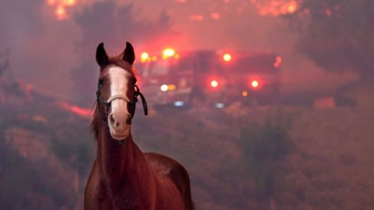 pets_in_wildfires
